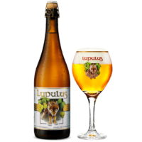 lupulus-blonde